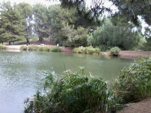 Debs Park Pond