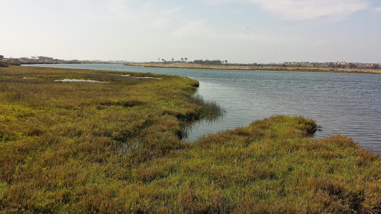 bolsa chica wetlands This morning we walked the 2 mile bolsa chica wetland trails we had a total of 6 working guide dogs and 1 puppy in training what an exciting day we had.